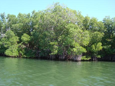 Isla Margarita - Restinga